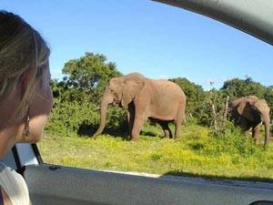 olifant uit auto zuid afrika