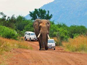 Pilanesberg selfdrive safari