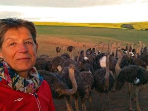 Struisvogels bij Heidelberg
