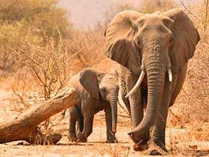 Zuid-Afrika safari reis