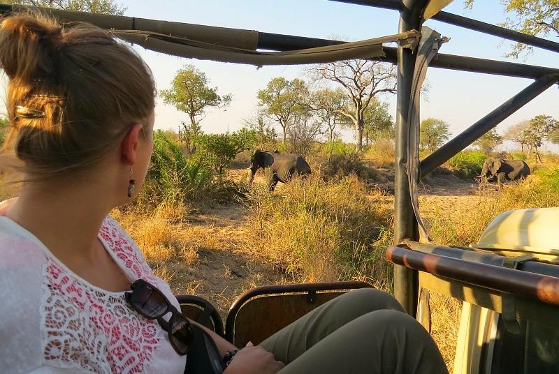 Olifanten tijdens safari