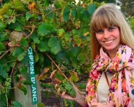 Wijnranken Stellenbosch