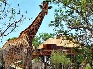 huwelijksreis-zuid-afrika-safari-lodge
