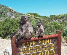 Kaapstad: top 10 activiteiten