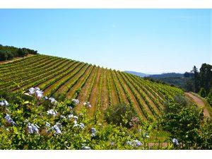 Wijnvelden-huwelijksreis