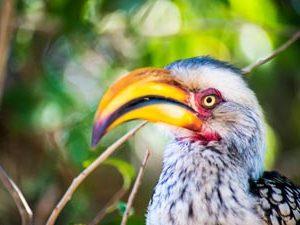 rondreis Zuid Afrika auto - vogel