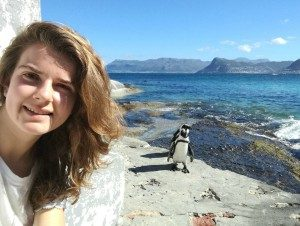 Pinguin - Rondreis Zuid Afrika auto