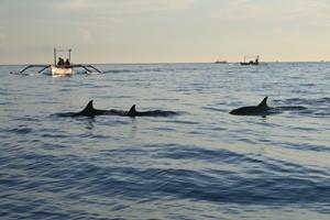 Schauen Sie den Delfinen beim Spielen zu