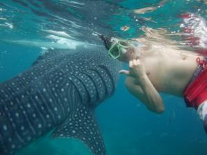 Mann mit Walhai vor Oslob