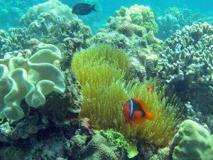 Unterwasserwelt bei Danjugan Island, Visayas