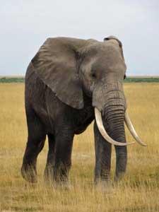 Passendes Wetter für Safaris