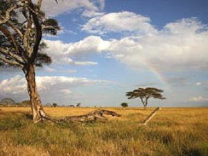 Weite Savanne in Kenia