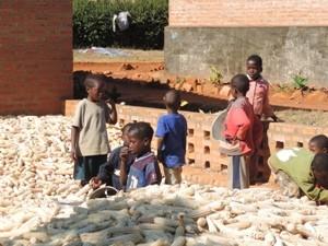 Kinder helfen in einem Berg von Maiskolben