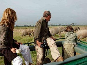 Reisende beobachten Elefanten vom Dach des Safarifahrzeugs