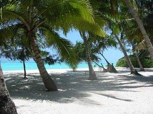 Wiegende Palmen auf Sansibar