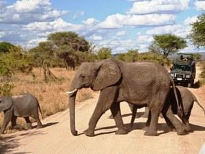 Erleben Sie die Serengeti und den Ngorongoro Krater