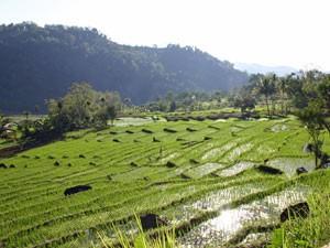 Ausblick über die terrassenförmigen Reisfelder.