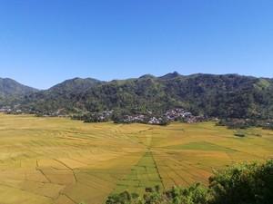 Felder auf dem Weg nach Ruteng auf Flores