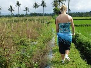Reisende läuft entlang Reisfelder in Kalibaru - Java, Bali und Sumatra