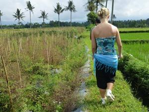 Reisende läuft entlang Reisfelder in Kalibaru
