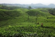 Indonesien: grün, grüner, am grünsten