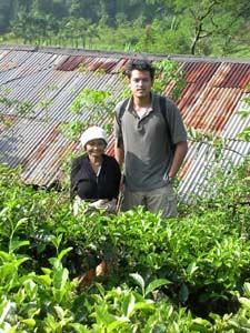 Einheimische Teepflückerin mit Reisendem