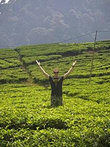 Mann in grüner Teeplantage.