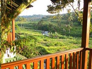 Aussicht auf die grüne Umgebung in Bogor.