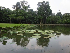Teichanlage im Botanischen Garten.