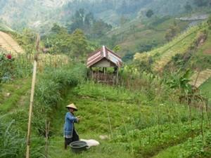 Wanderweg in Sukuh - Java, Bali und Sumatra