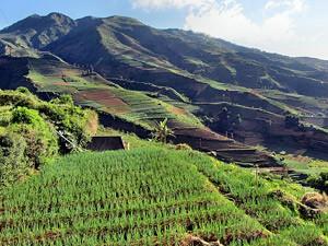 Reisfelder auf der Fahrt nach Wonosobo - Highlights von Java und Bali