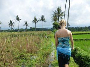 Reisende läuft entlang Reisfelder in Kalibaru - Inselhuepfen Indonesien