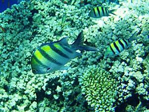 Farbenfrohe Fische in Komodos Unterwasserwelt.