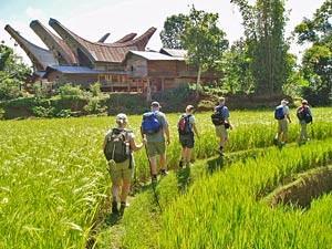 Wanderung durch die grünen Reisfelder.