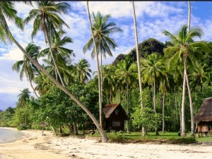 Grüne Palmen am Strand von Cubadak