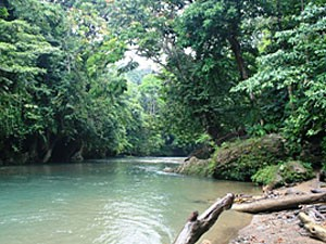 Fluss im Gunung Leuser Nationalpark.