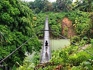 Brücke führt in den Dschungel des Leuser Nationalparks.