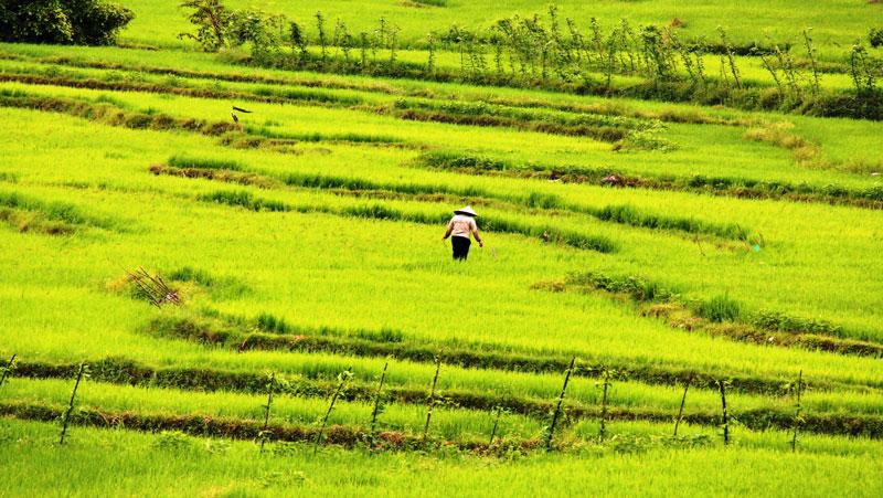 sulawesi und bali: grüne reisterrassen