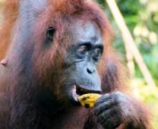 Kalimantan Dschungelabenteuer