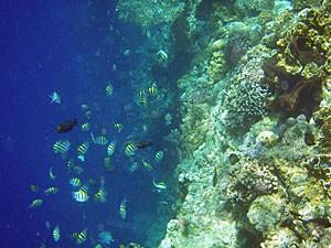 Bunte Fische vor der Insel Menjangan