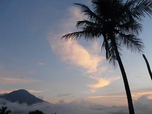 Palme in der Abenddämmerung