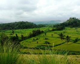 Die grüne Landschaft um den Gunung Agung herum