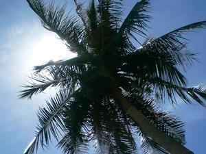 Palme unter dem klaren Himmel auf Bali.