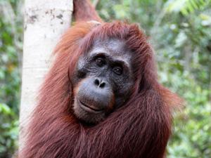Highlights von Java, Bali und Sumatra
