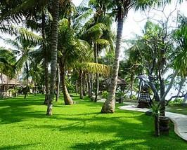 Grüne Gartenanlage im komfortablen Hotel in Lovina