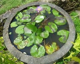 Lotusblumenteich an der Unterkunft in Sidemen