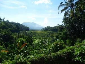 Aussicht über die grüne Naturlandschaft in Tirtagangga