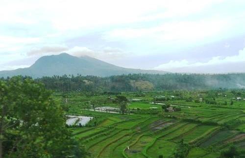 Grüne Landschaft in der Umgebung von Tirtagangga