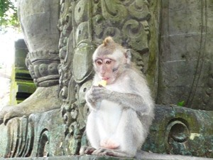 Affe im Monkey Forest in Ubud - Bali Highlights