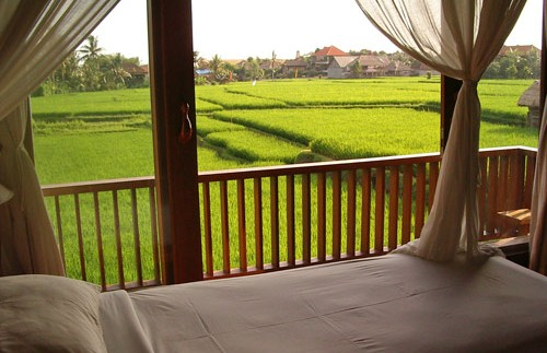 Aussicht auf die grünen Reisfelder in Ubud
